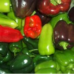 Sweet Pepper Sale at Earthscape!
