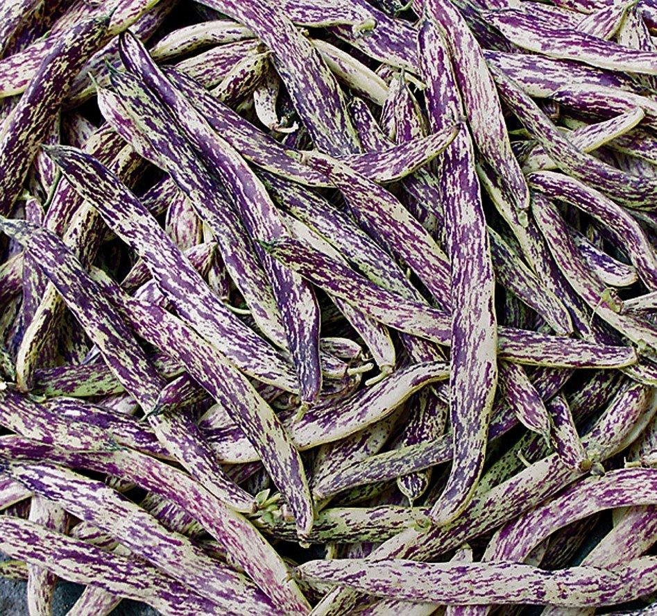 dragon-tongue-beans-79662632b6962b25